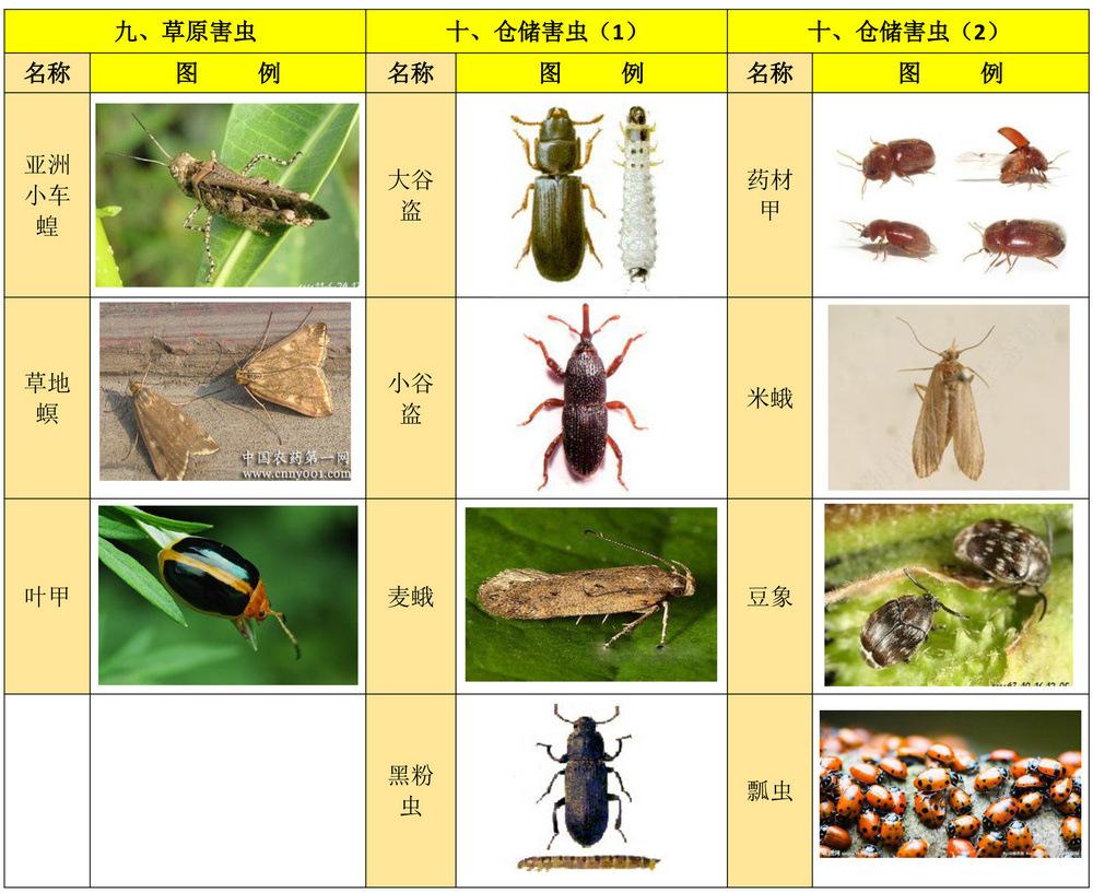 杀虫范围4